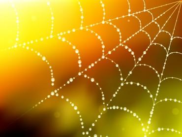 Spider Blur Web