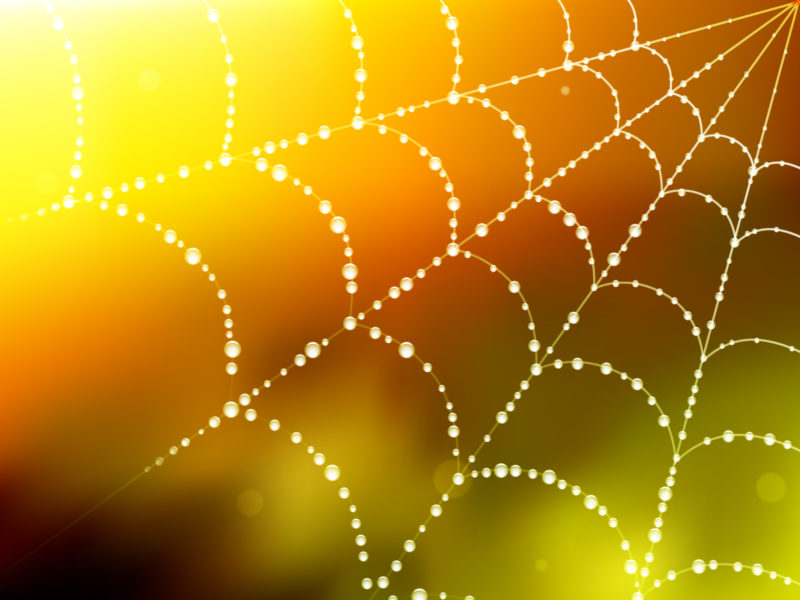 Spider Blur Web Backgrounds
