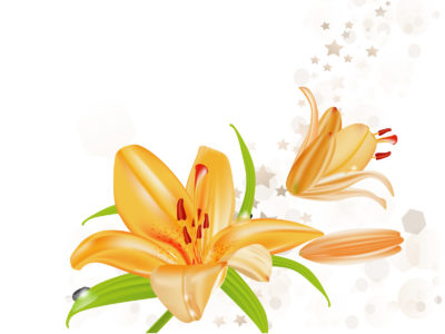 Lily Flowers Illustration Powerpoint Backgrounds