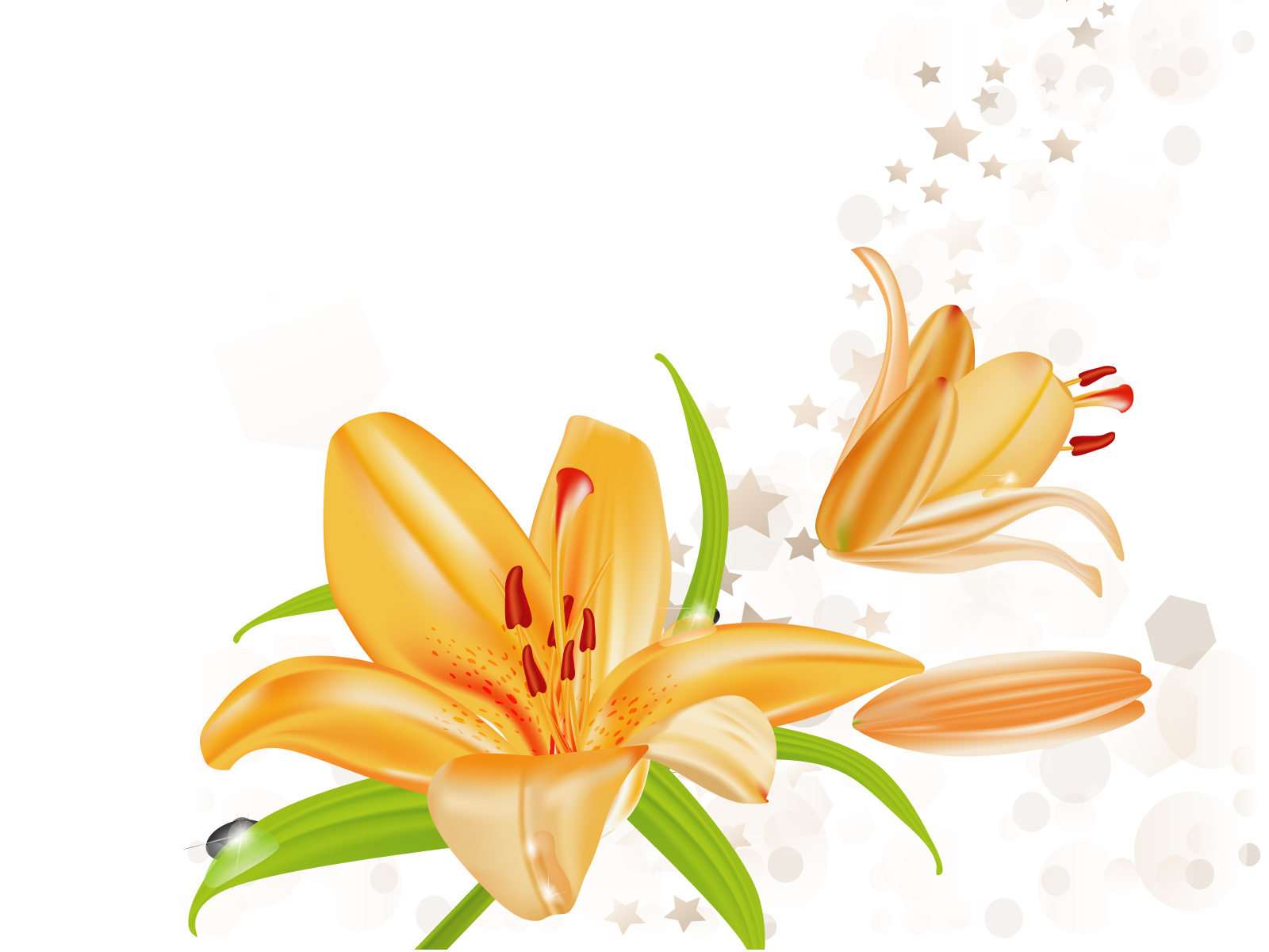 Flowers ppt backgrounds page 7 of 9 ppt grounds lily flowers illustration powerpoint dhlflorist Images
