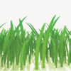 3d Grass Powerpoint Template