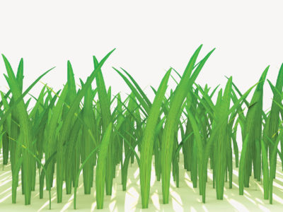 3d Grass Powerpoint Template