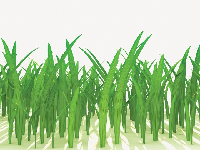 3D grass PPT Backgrounds