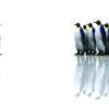 Penguins Powerpoint Vector Backgrounds