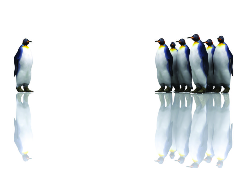Penguins Powerpoint Vector Backgrounds