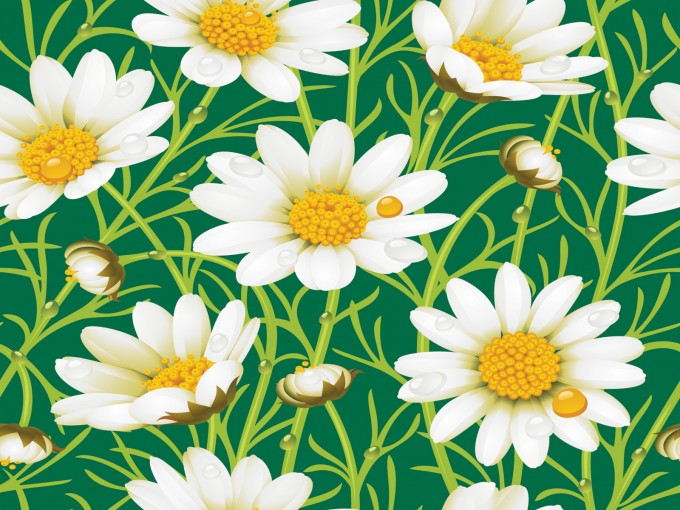 Daisy yellow flowers PPT Backgrounds
