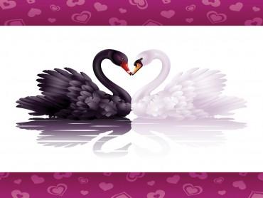 Swans Loves