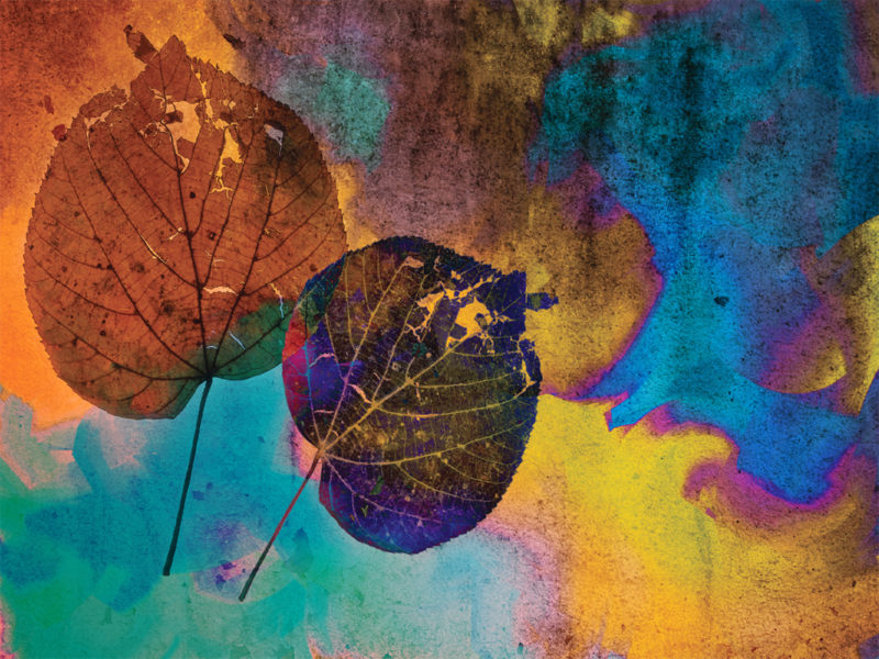 Autumn Folio PPT Background