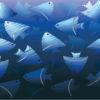 Blue Fish Powerpoint Animals Design