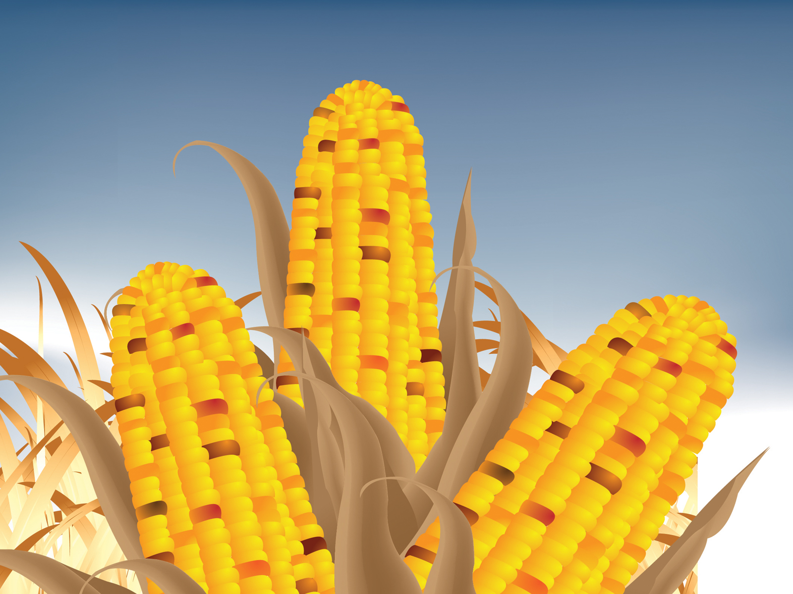 Corn cob powerpoint backgrounds
