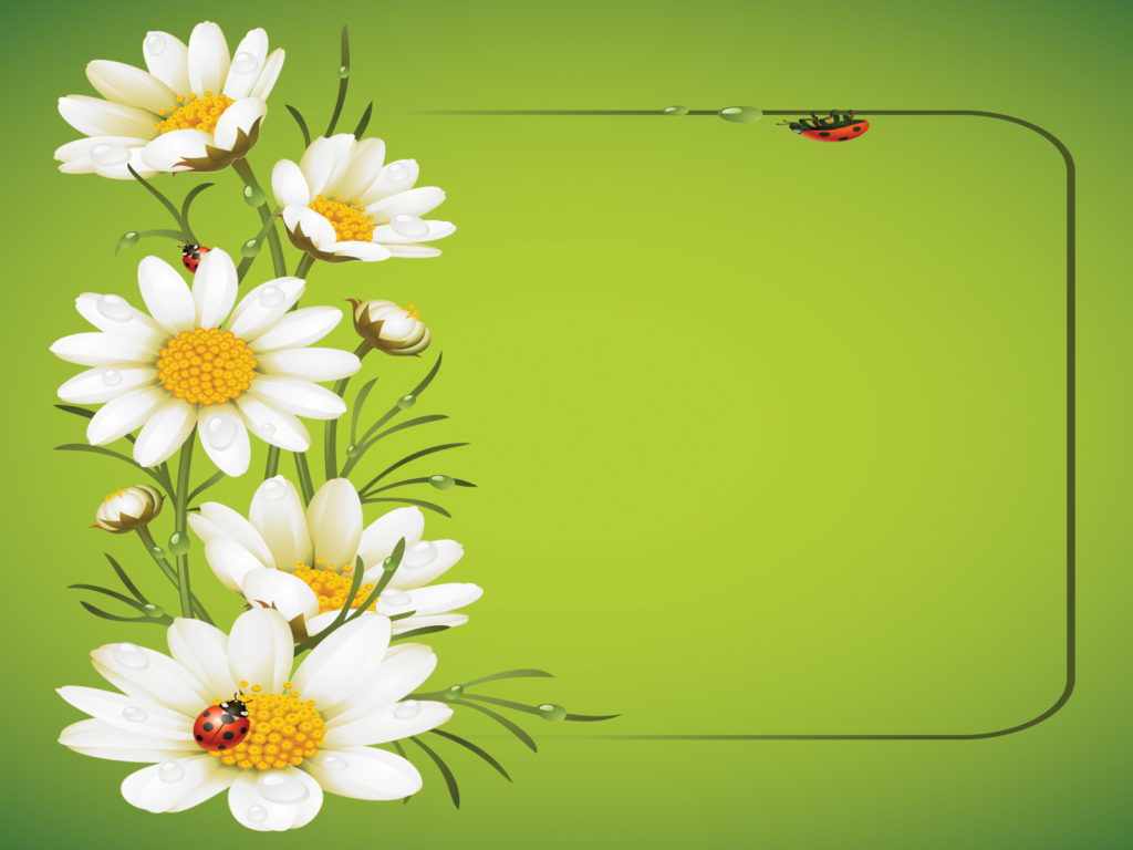 ladybug and daisies ppt template ppt backgrounds - flowers, green, Modern powerpoint