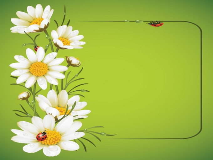 Ladybug and Daisies PPT Backgrounds