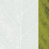 Green Leaf Presentation Design Backgrounds