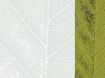 Green Leaf Presentation Design Backgrounds
