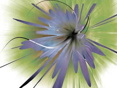 Purple Orchide Flower Backgrounds