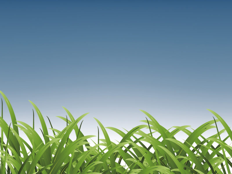 Grass for Sports PPT Backgrounds
