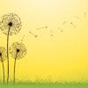 Dandelion PPT Backgrounds