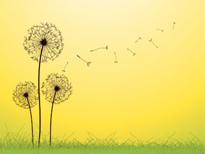 Dandelion PPT Backgrounds