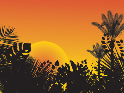 Tropical Sunset Design Backgrounds