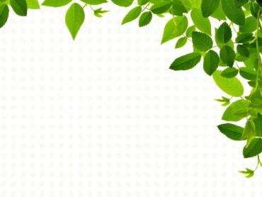 Real Leaves Design