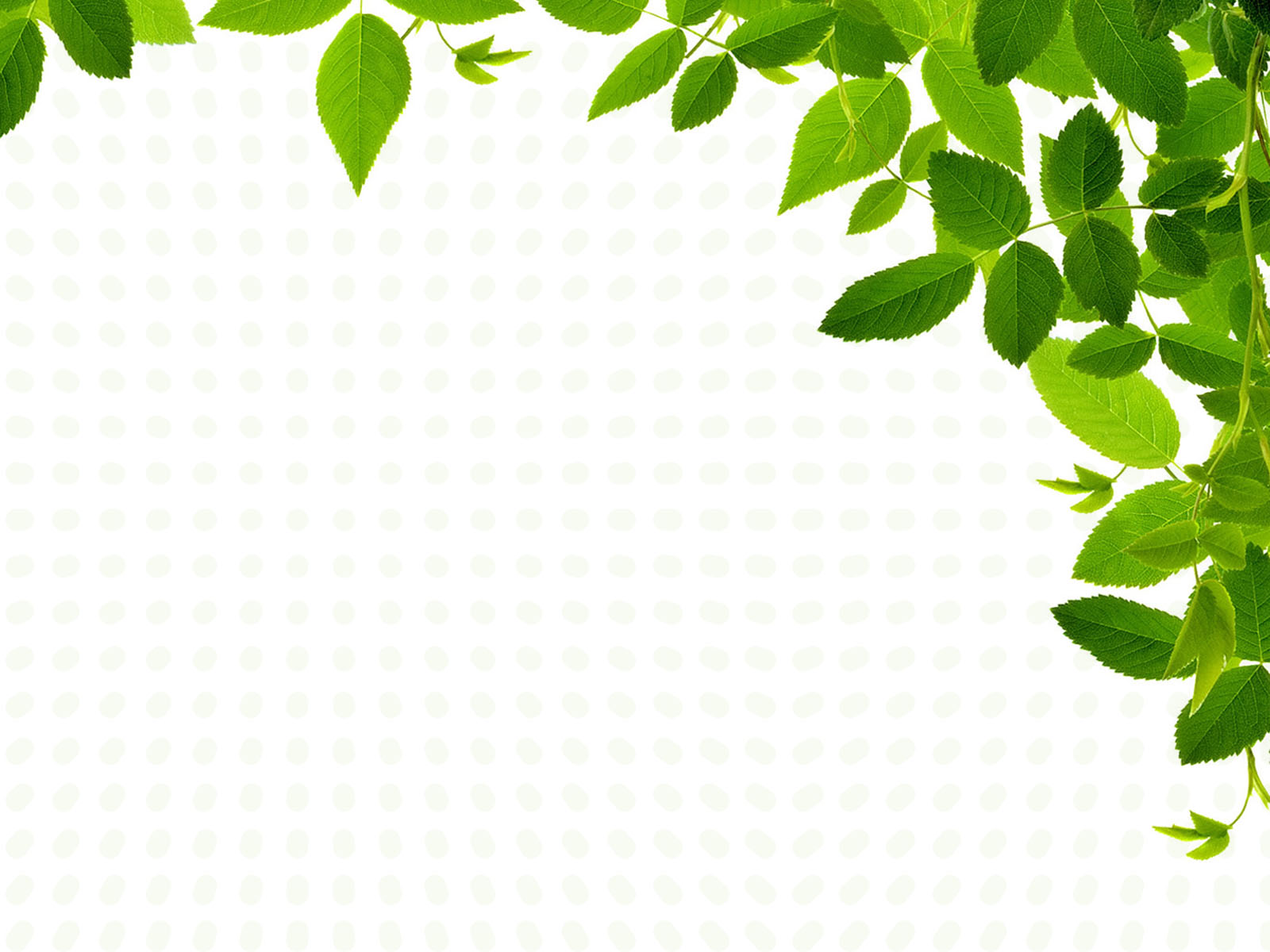 Real Leaves Design PPT