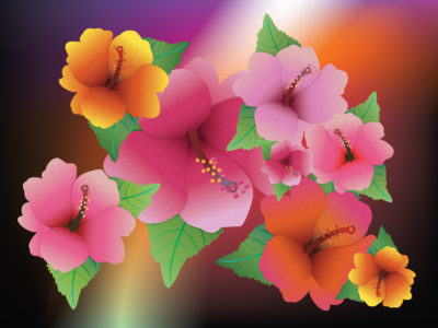 Hibiscus Exotic Flowers Backgrounds