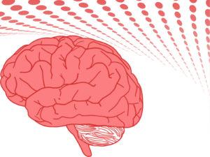 Human Brain PPT Templates