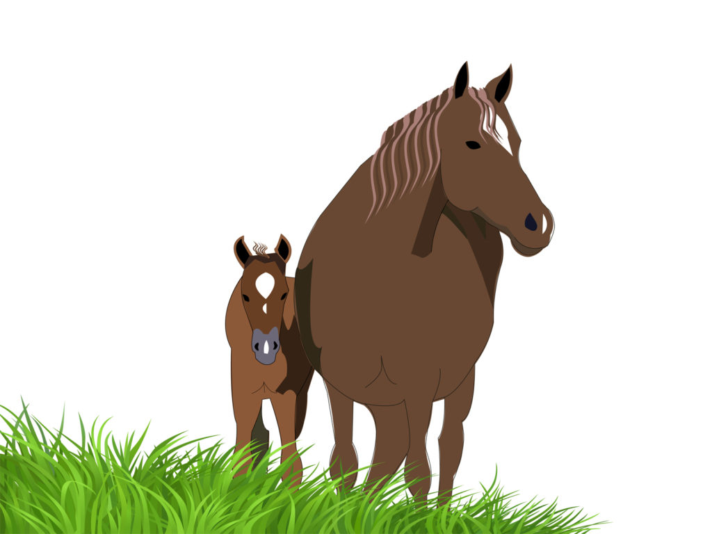 Foals And Horses Backgrounds Animals Brown Green Nature