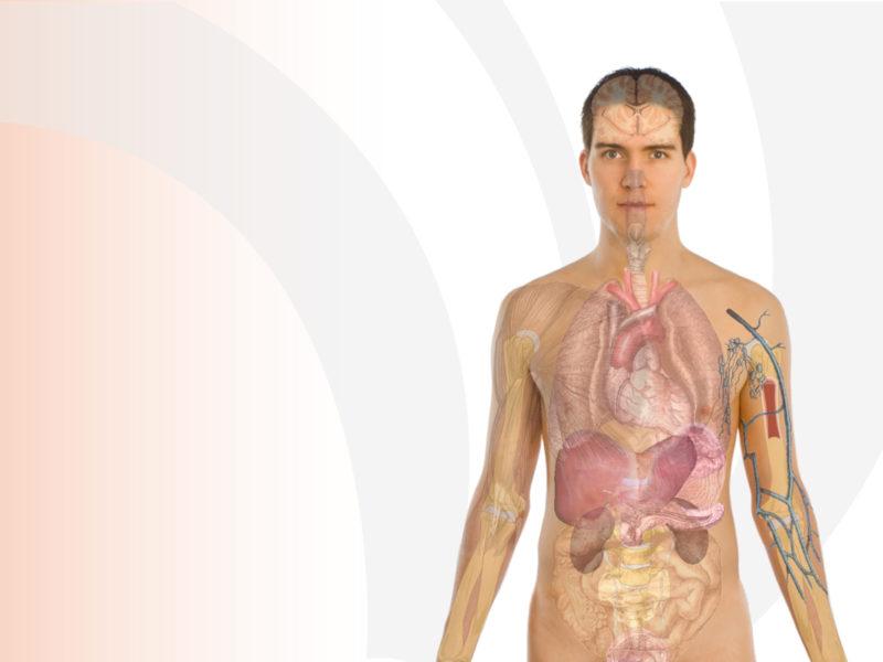 Human Body Anatomy Powerpoint Templates