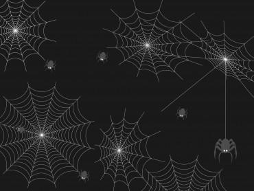 Spider Technology
