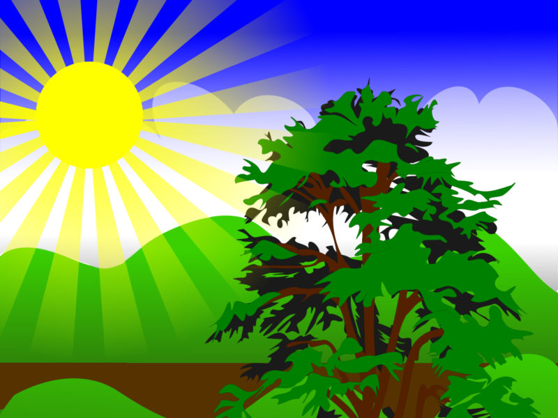 Sunny Spring with Blue Sky Backgrounds