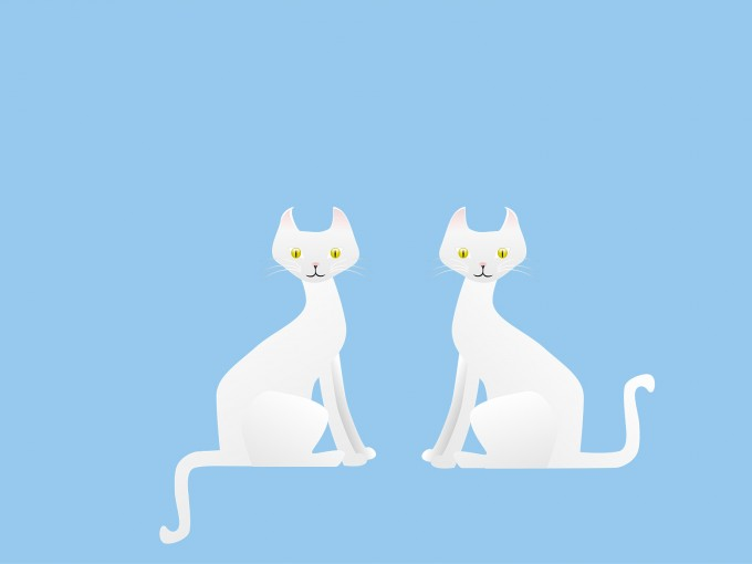 Two White Cats PPT Backgrounds