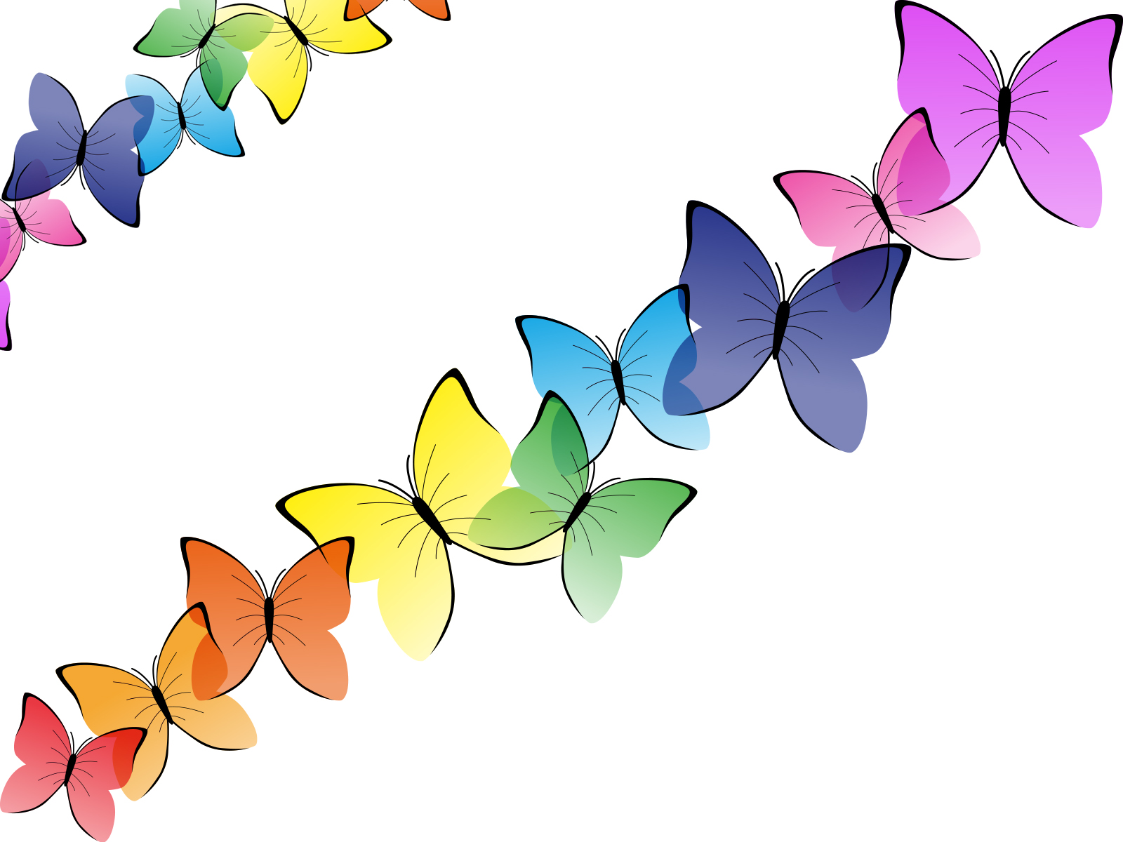 beautiful butterflies backgrounds animals multicolor
