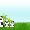 Panda Bear PPT Backgrounds