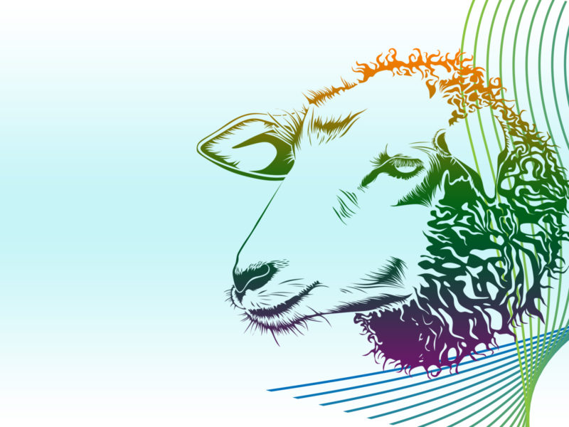 Sweet Sheep PPT Backgrounds
