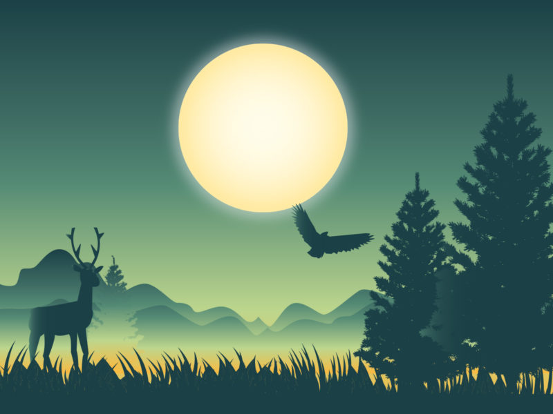 Deer Experience Backgrounds
