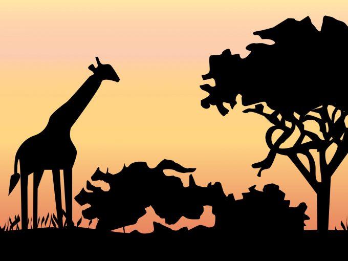 Giraffe at Jungle PPT Backgrounds
