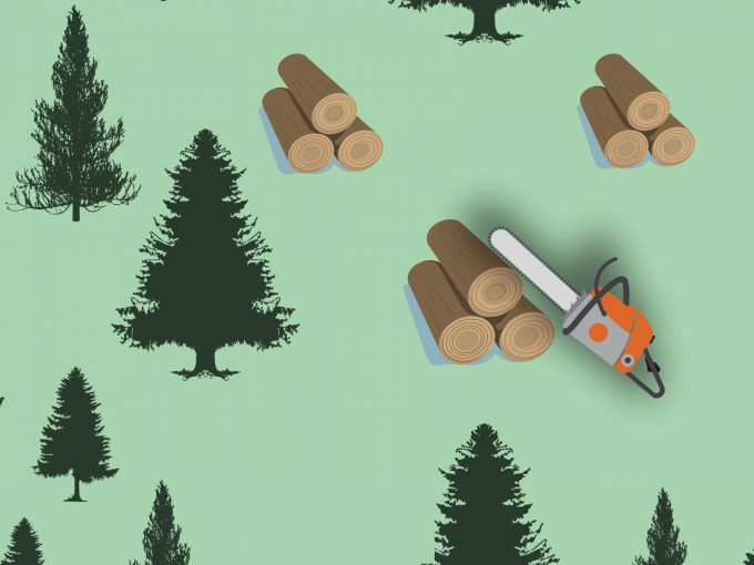 Pine Forest and Whipsaw PPT Backgrounds