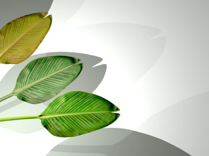 Palmbatter Powerpoint Backgrounds