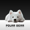Polar Bear Powerpoint Backgrounds