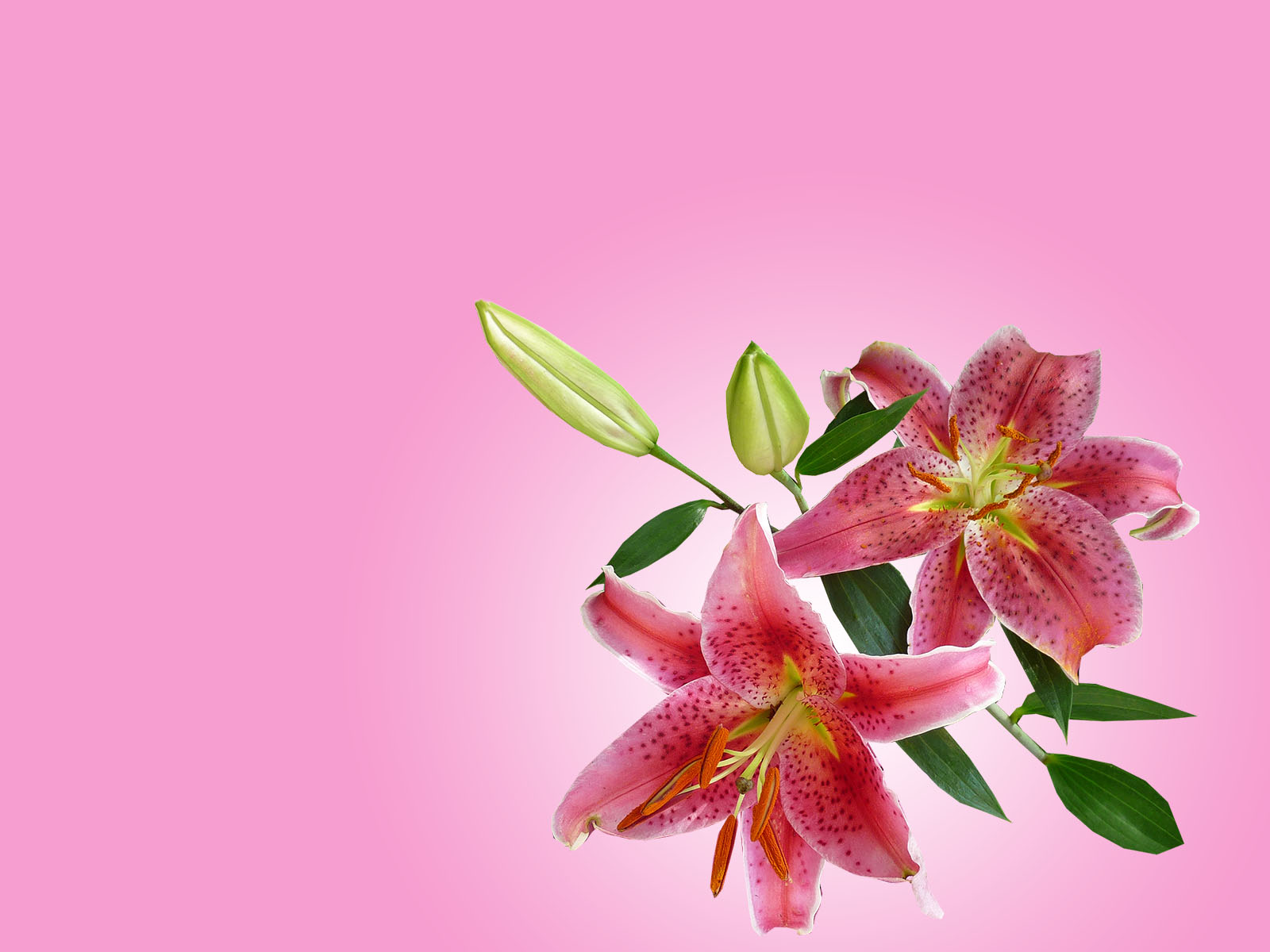 Lily Flowers Backgrounds Flowers Templates Free Ppt Grounds And