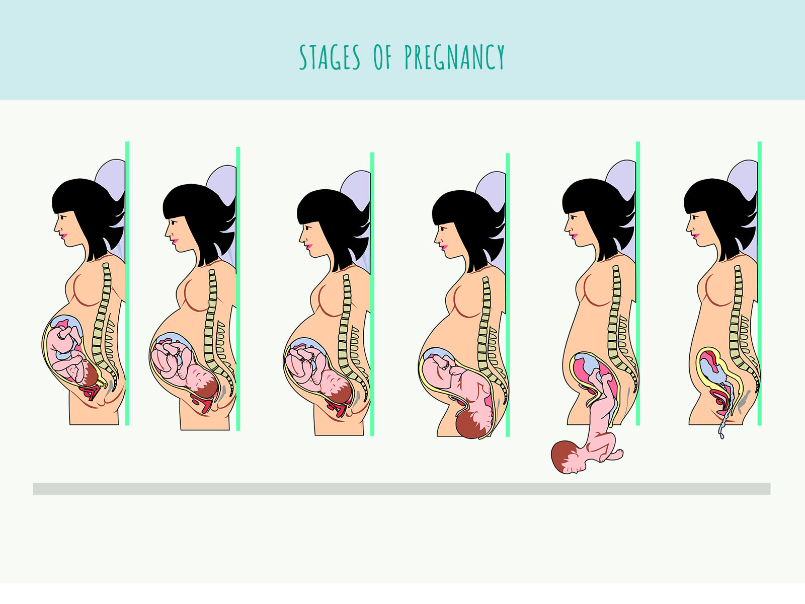 pregnancy background