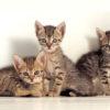 Cute Kittens Powerpoint Templates