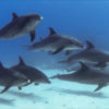Dolphin Pod Oceans Life Background