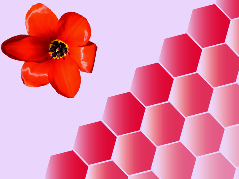 Tulips Floral Powerpoint Backgrounds