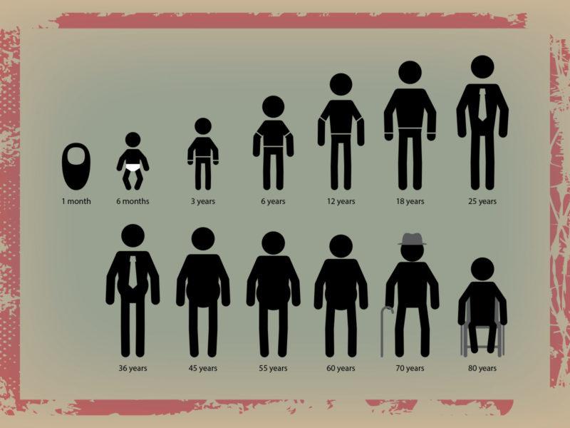 Human Life Cycle PPT Grounds