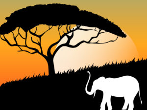 African Sunset PPT Backgrounds
