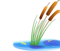 Reeds in water backgrounds