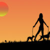 Animal lover ppt backgrounds