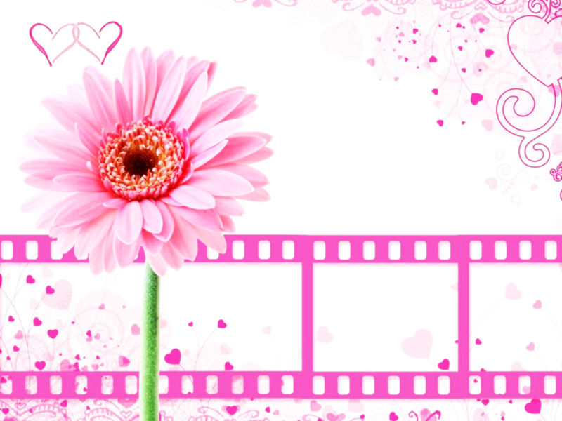 Pink Background with Cinema Clips